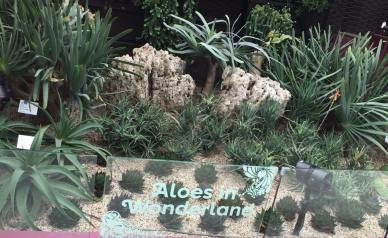 Aloes in Wonderland
